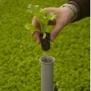 Trapiantatore Small Multiplanter